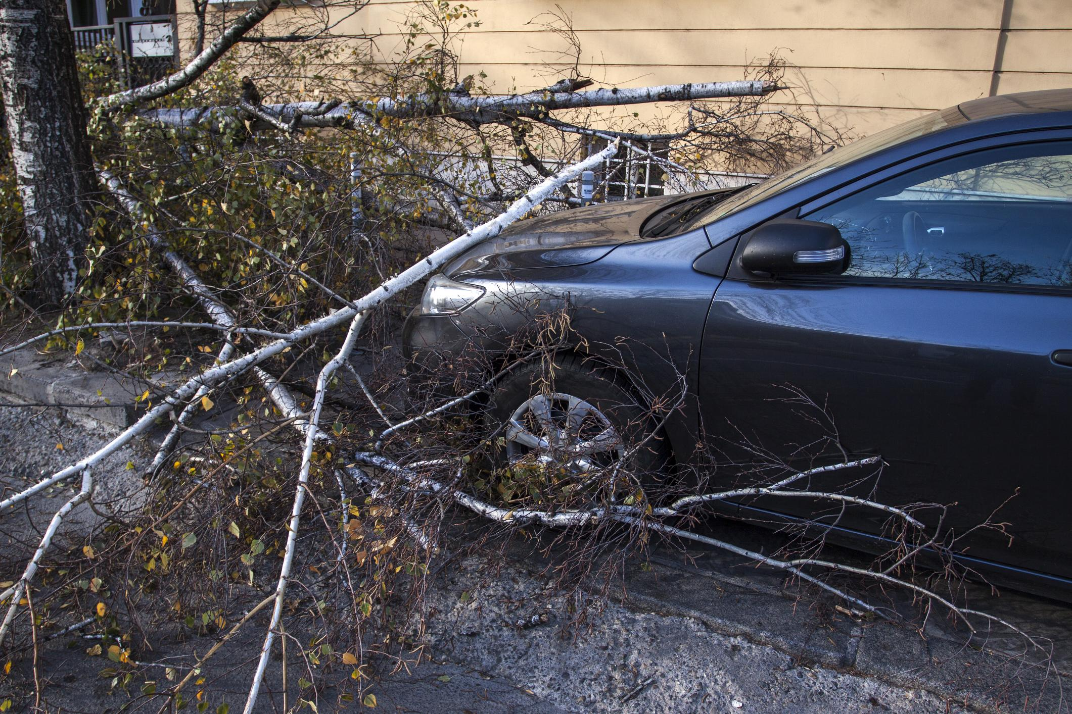 emergency tree service colorado springs