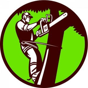 Colorado Springs Tree Service