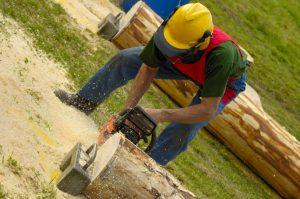 tree services colorado springs